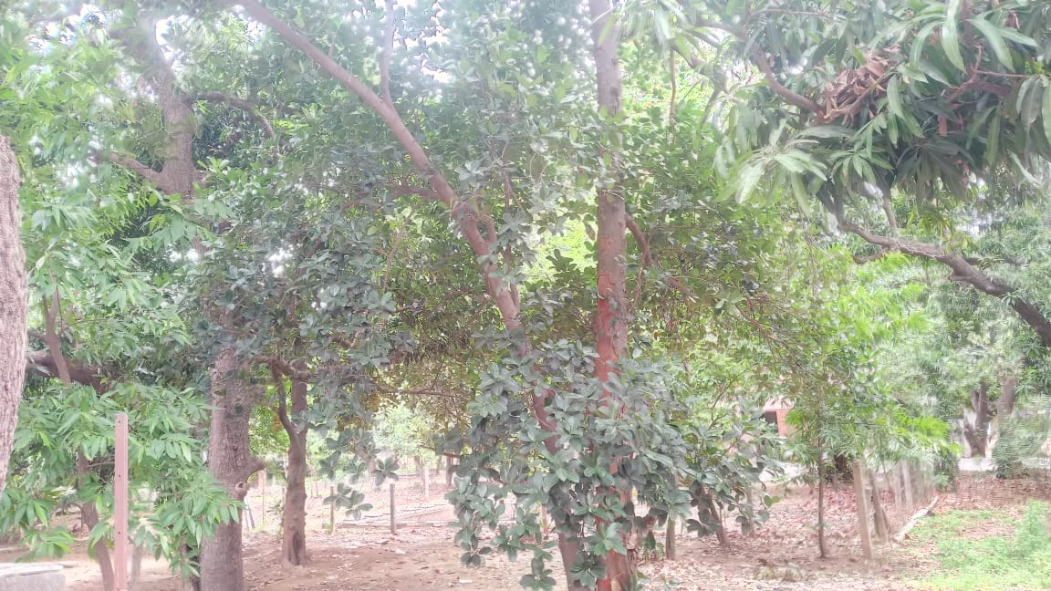 land plot for sale in arcot road valarasavakkam | Deal A Property